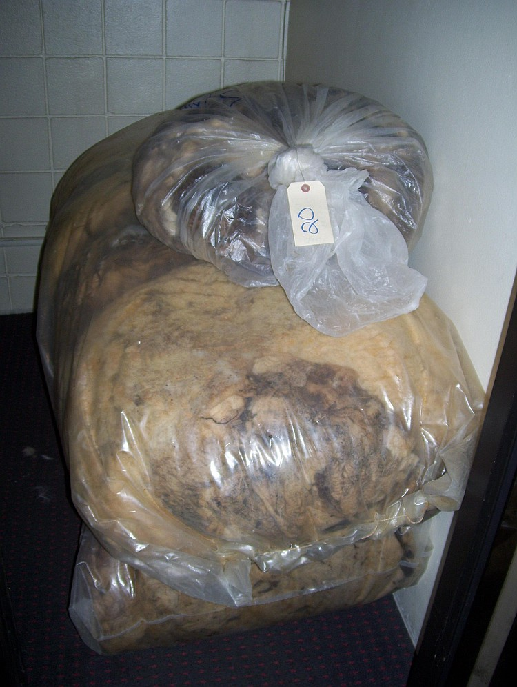 3 bags (2 lg. 1 sm) sheep fleece