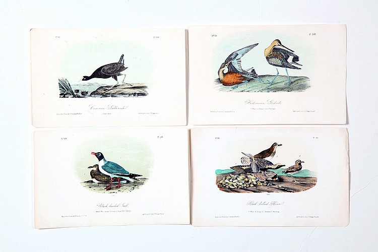 FOUR BIRDS OF AMERICA HANDCOLORED LITHOGRAPHS.