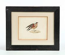 WATERCOLOR OF A BIRD.