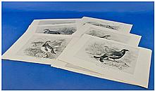 Set Of 9 Monochrome Bird Prints After Drawings By