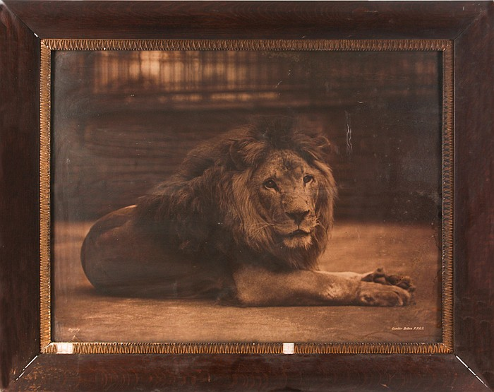Gambier Bolton (1854-1929) Majesty, ca. 1890, Mural-sized carbon print mounted on linen,