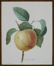 White Apple by Pierre Joseph Redoute