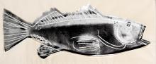 Andy Warhol - Fish