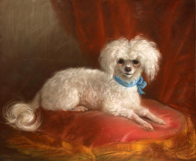 Unknown Artist - English School Portrait of a Poodle