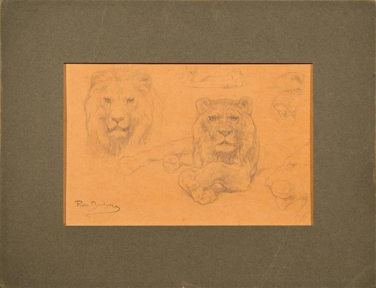 ROSA MARIE BONHEUR, (French, 1822-1899), LION STUDY, pencil on paper, image: 6 3/4 x 10 1/4 in.