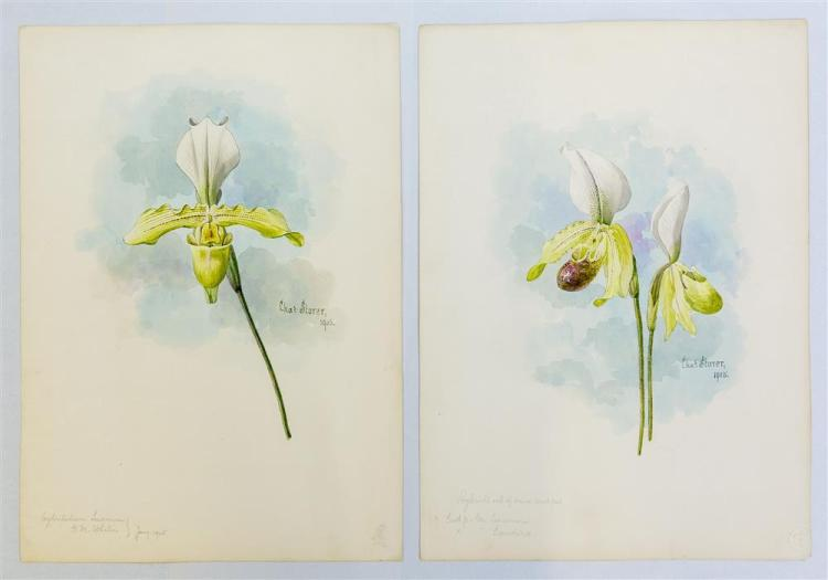 CHARLES STORER, (American, 1817-1907), PAIR OF ORCHID WATERCOLORS, 1905, watercolor on paper