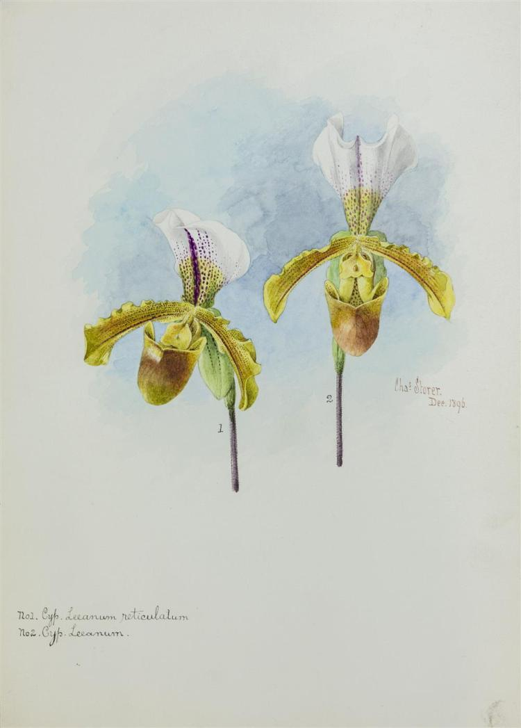 CHARLES STORER, (American, 1817-1907), TWO ORCHIDS, December 1896; watercolor, 14 x 10 in.