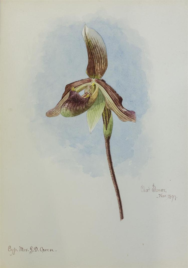 CHARLES STORER, (American, 1817-1907), ORCHID, November 1897; watercolor, 14 x 10 in.