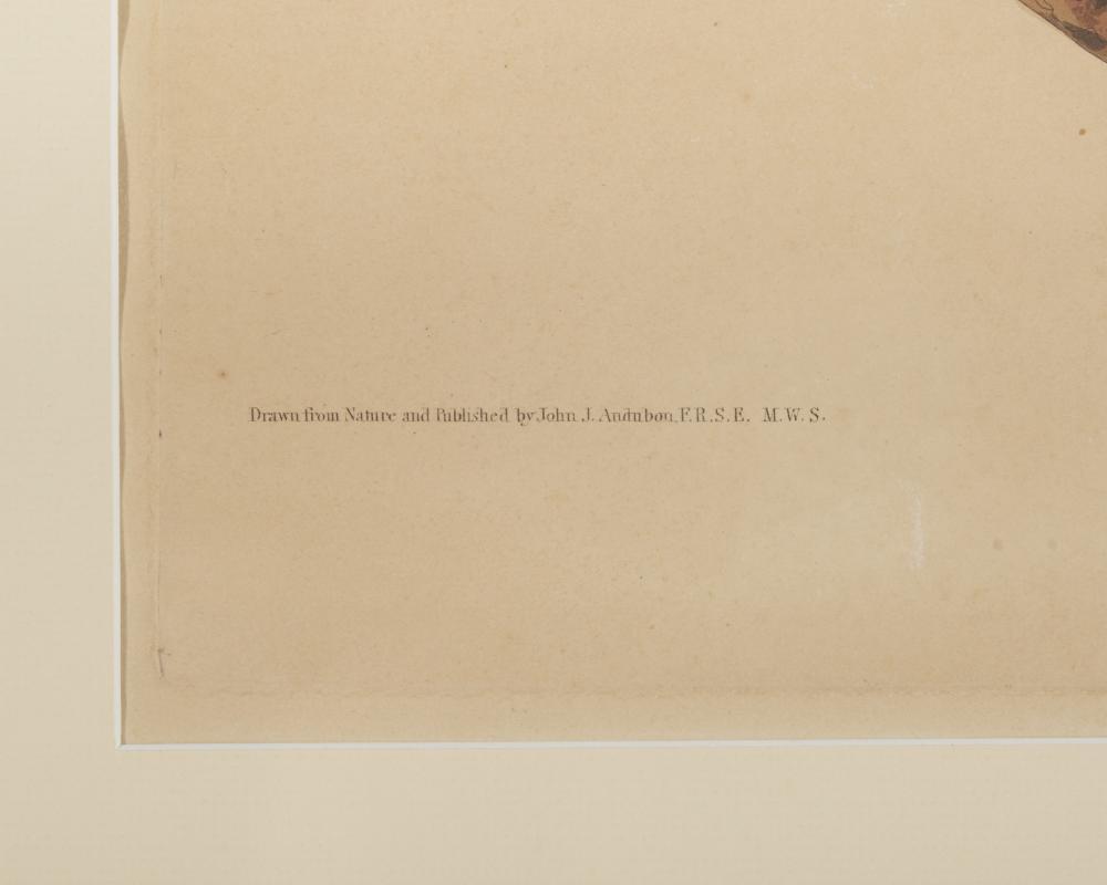 JOHN JAMES AUDUBON, (American, 1785-1851), Purple Martin, hand colored aquatint, plate: 25 1/2 x 20 1/2 in., frame: 42 x 32 in.