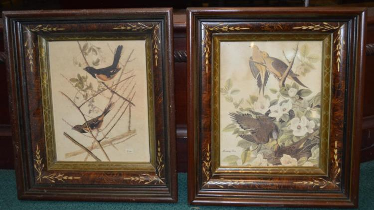 Pair of Vintage framed bird prints