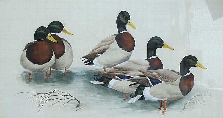 Watercolor of five mallards Art Lamay.