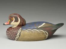 Rare wood duck drake, Ken Anger, Dunnville, Ontario, circa 1950.