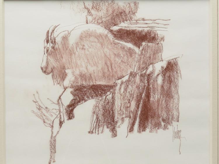 Mountain goat study, Cont'e crayon on paper, Bob Kuhn.