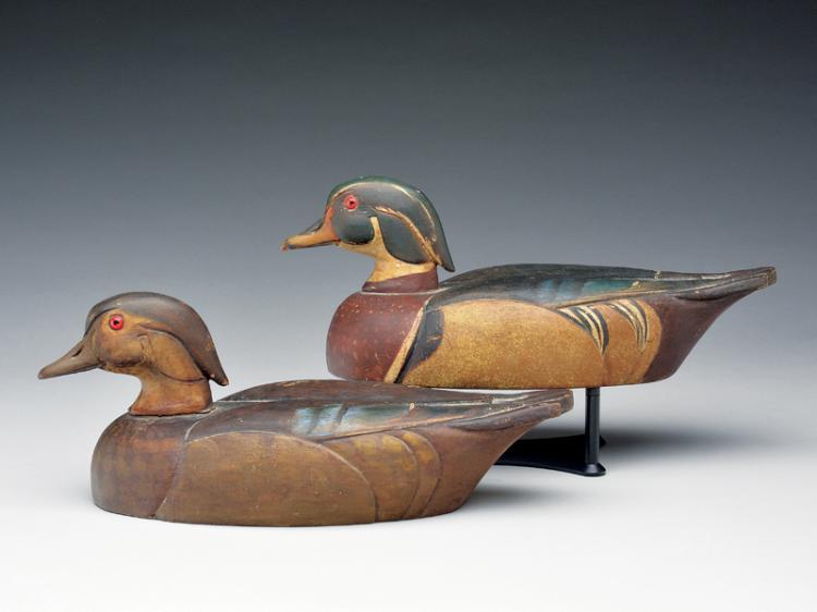 Rare rigmate pair of wood ducks, Al Ries, Chicago, Illinois