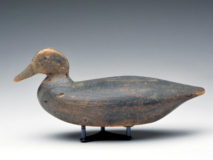 Black duck by a member of the Verity family, Seaford, Long Island, New York.