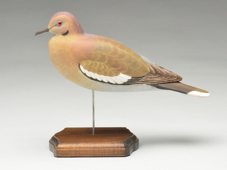 Very rare white wing dove, Harold Haertel, Dundee, Illinois.