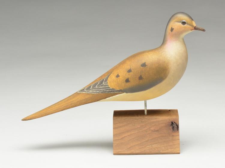 Mourning dove with slightly turned head, Harold Haertel, Dundee, Illinois.