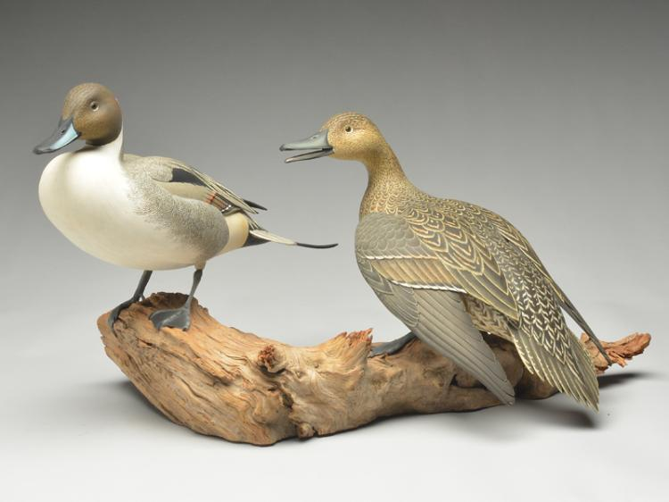 Exceptional pair of full size standing pintails on driftwood base, Oliver Lawson, Crisfield, Maryland.