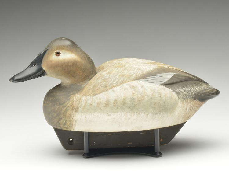Shooting model canvasback hen, William Schultz.