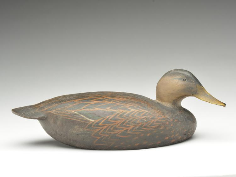 Black duck, Ward Brothers, Crisfield, Maryland.