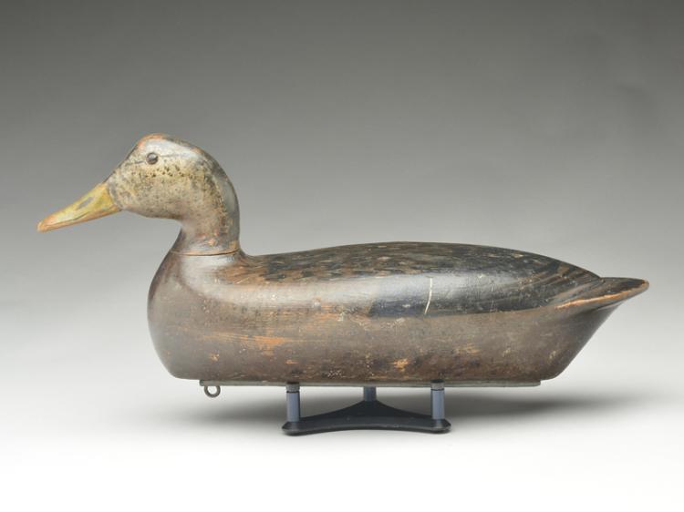 Black duck, Bert Graves, Peoria, Illinois.