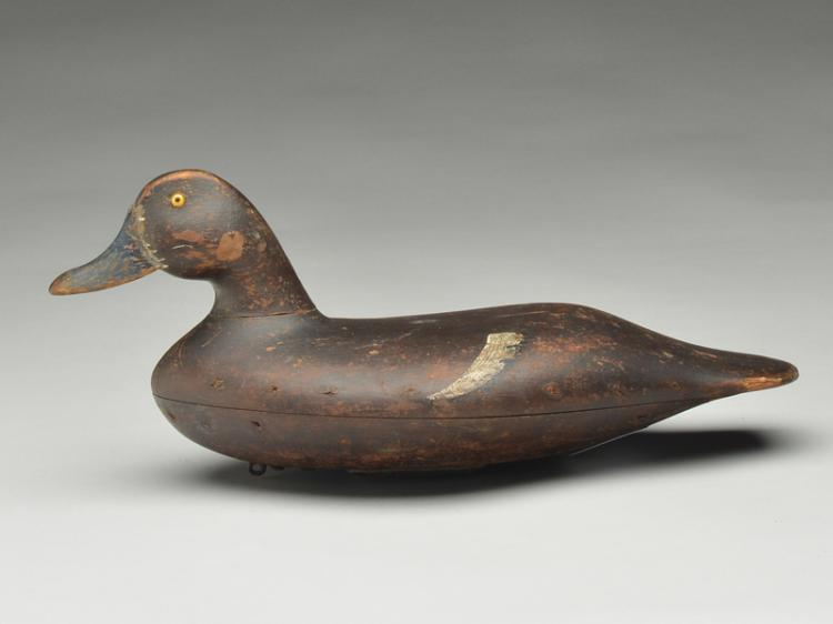 Very rare swimming hollow carved bluebill hen, John Blair, Sr., Philadelphia, Pennsylvania, last quarter 19th century.