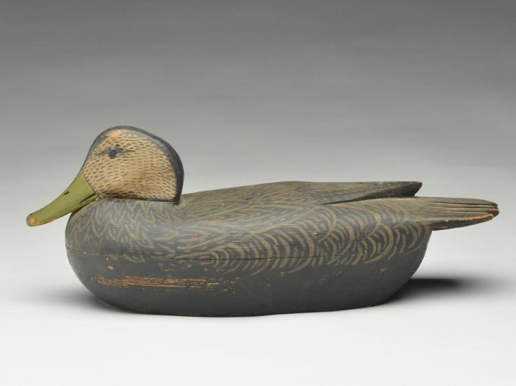 Black duck in content pose, Tom Fitzpatrick, Delanco, New Jersey.