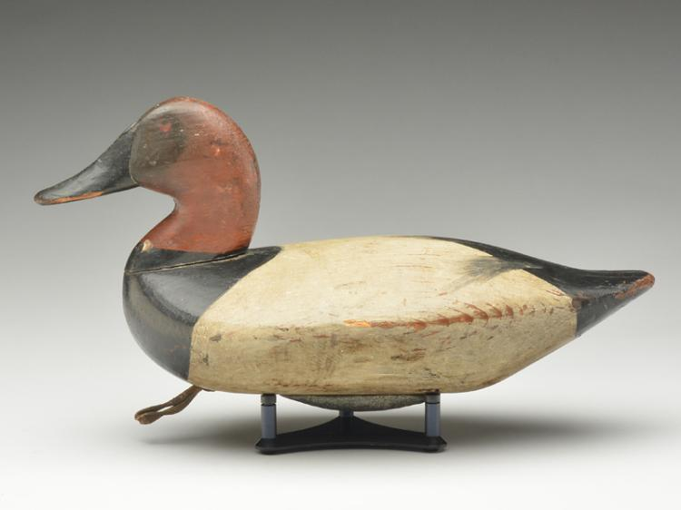 Canvasback drake, James T. Holly, Havre de Grace, Maryland, circa 1900.
