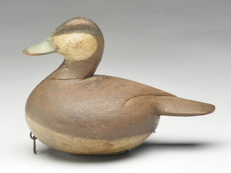 Ruddy duck, Mark McNair, Craddockville, Virginia.