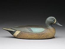 Bluewing teal drake, Mark McNair Craddockville, Virginia.