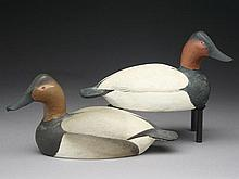 Pair of 1/4 size canvasbacks, Ward Brothers, Crisfield, Maryland.