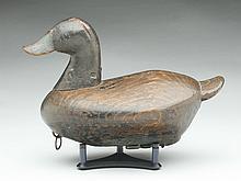 Rare ruddy duck, Alvirah Wright, Duck, North Carolina, last quarter 19th century.