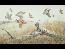 """""""Covey Rise, Bobwhite,"""" a watercolor by Maynard Reece."""