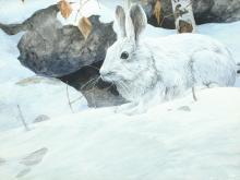 """Snowshoe Hare,"" an acrylic on board by Mario Fernandez."