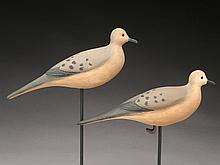Rare pair of doves, Cigar Daisey, Chincoteague, Virginia.