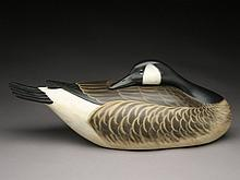 Sleeping Canada goose, George Strunk, Glendora, New Jersey.