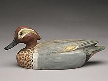 Rare greenwing teal drake, Ben Schmidt, Detroit, Michigan.