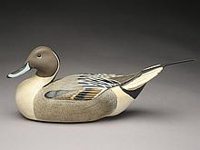 Pintail drake, Ward Brothers, Crisfield, Maryland.