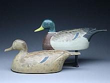 Rigmate pair of mallards, Percy Bicknell, Lulu and Sea Islands, British Columbia, circa 1950s.