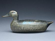 Extremely rare bluewing teal hen, Charles Schoenheider, Sr., Peoria, Illinois, 1st quarter 20th century.