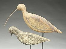 Two flat sided shorebirds, circa 1900.