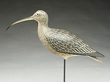 Large curlew, Alfred Chopin, Sette, France, circa 1950.