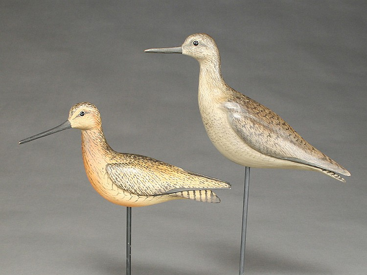 Two shorebirds, William Gibian, Onancock, Virginia.