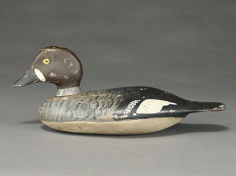 Very rare goldeneye drake in eclipse plumage, Stevens Brothers, Weedsport, New York, circa 1880's.