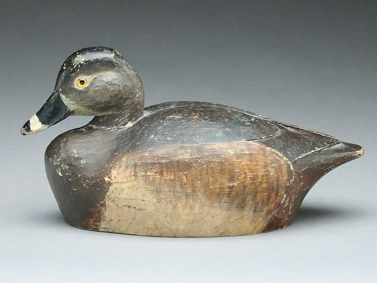 Rare ring neck hen, Warren Dettman, Milwaukee, Wisconsin.