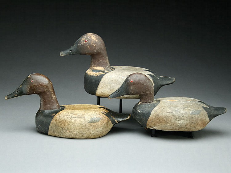 Three Wisconsin canvasbacks from the NeePee-Nauk gun club, first quarter of the 20th century.