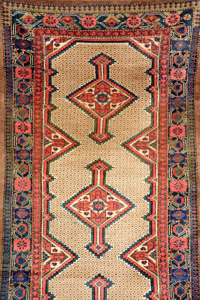 Northwest Persian 'Runner',