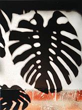 Gabriel Orozco, born 1962, photo print on light cardboard,