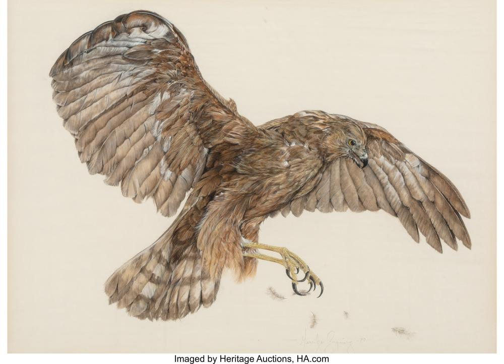 Lot 21243: Merrilyn Jaquiery (New Zealander, 20th Century) Hawk, 1979 Tempera and pencil on