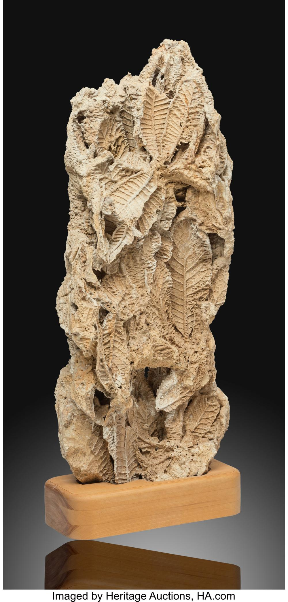 Lot 21314: Fossil Leaves Unidentified Species Presumed Austria This decorative piece is m